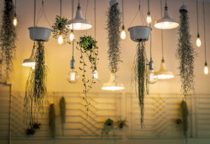 Alles im grünen Bereich zuhause: Ampelpflanzen befestigen