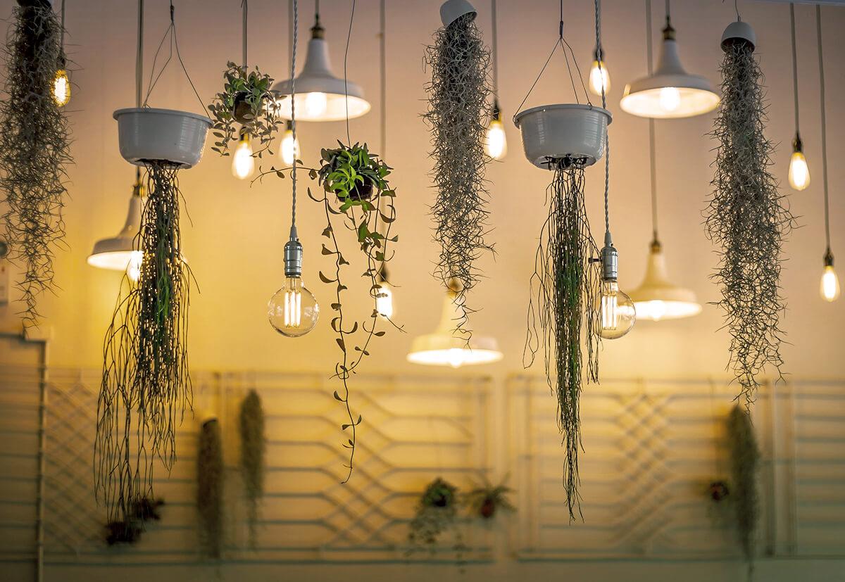 Ampelpflanzen befestigen ist nicht schwer. Es gilt nur wenige Faustregeln zu beachten.