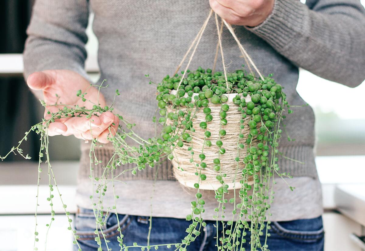 Sparen Platz und schenken trotzdem grün: Ampelpflanzen