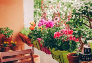 Blumenkästen und Rankgitter sicher befestigen