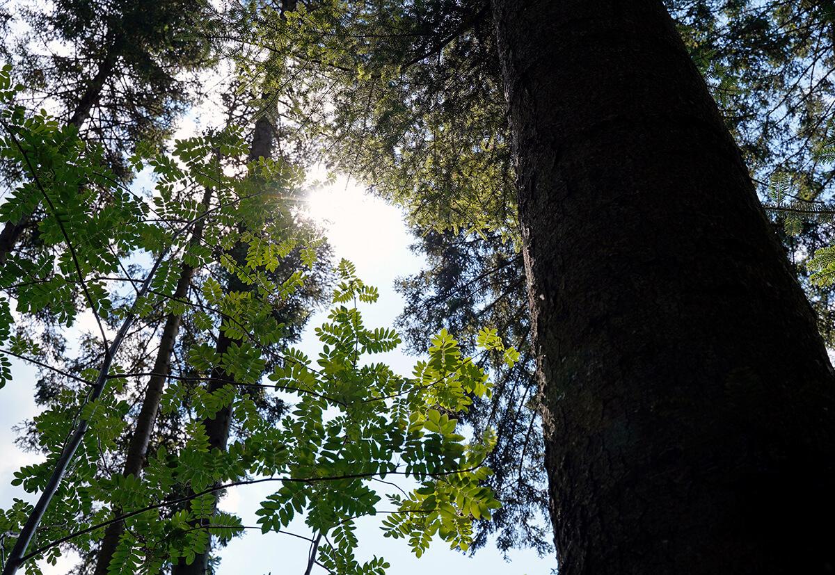 Sonnenstrahlen brechen durch Baumkronen.